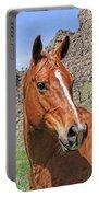 Quarter Horse Portrait Montana Portable Battery Charger