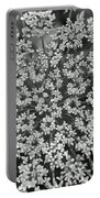Queen Anne's Lace In Black And White Portable Battery Charger