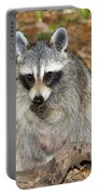 Raccoon Procyon Lotor Adult Foraging Portable Battery Charger