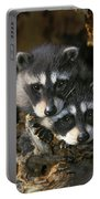 Raccoon Young Procyon Lotor In Tree Portable Battery Charger