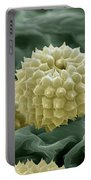 Ragweed Pollen Portable Battery Charger