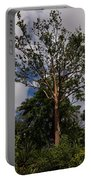 Rainbow Eucalyptus - Tall Proud And Beautiful Portable Battery Charger