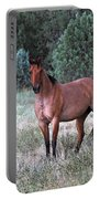 Ranch Horse Young Arizona Portable Battery Charger