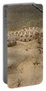 Rattlesnake Arizona Desert Portable Battery Charger