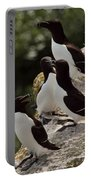 Razorbill Cliff Portable Battery Charger