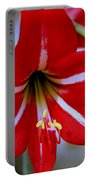 Red And White Lilly Portable Battery Charger by Debra Forand