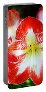Red And White Amaryllis Portable Battery Charger