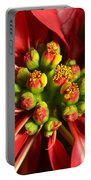 Red And White Poinsettia Flower Portable Battery Charger by Catherine Sherman