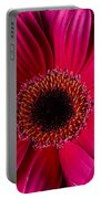 Red Daisy Close Up Portable Battery Charger