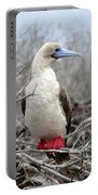 Red-footed Booby Portable Battery Charger