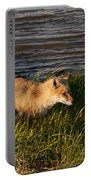 Red Fox Hunting The Edges At Sunset Portable Battery Charger