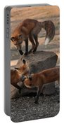 Red Foxes Vulpes Fulva Portable Battery Charger