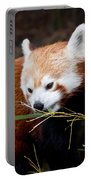 Red Panda  Ailurus Fulgens In Captivity Portable Battery Charger