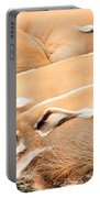Red River Hogs Potamochoerus Porcus Portable Battery Charger