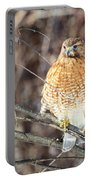 Red-shouldered Hawk Front View Square Portable Battery Charger