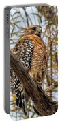 Red-shouldered Hawk In A Willow Tree Portable Battery Charger