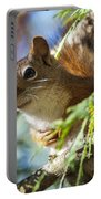 Red Squirrel In The Sun Portable Battery Charger