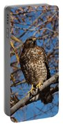 Red-tailed Hawk In A Willow Tree Portable Battery Charger