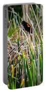 Red-winged Black Bird In The Cattails Portable Battery Charger