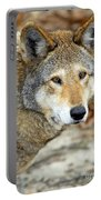 Red Wolf Portrait Portable Battery Charger