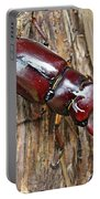 Reddish-brown Stag Beetle - Lucanus Capreolus Portable Battery Charger