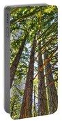 Redwoods 3 Big Basin Portable Battery Charger