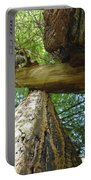 Redwoods Forest Art Prints Canvas Framed Redwood Trees Portable Battery Charger