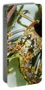 Reef Lobster Close Up Spotlight Portable Battery Charger