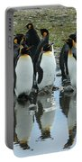 Reflecting King Penguins Portable Battery Charger