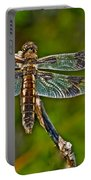 Resting Dragonfly Portable Battery Charger