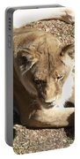 Resting Lioness Portable Battery Charger