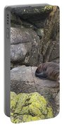 Resting Seal Portable Battery Charger