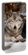 Resting Timber Wolf Portable Battery Charger
