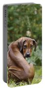 Rhodesian Ridgeback Puppy Portable Battery Charger
