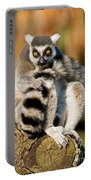 Ring Tailed Lemur Portable Battery Charger