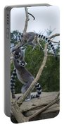 Ring Tailed Lemurs Playing Portable Battery Charger