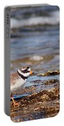 Ringed Plover  Portable Battery Charger
