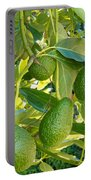 Ripe Avocado Fruits Growing On Tree As Crop Portable Battery Charger