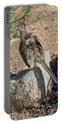 Roadrunner Sunning Atop Rock Portable Battery Charger