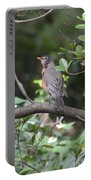Robin In The Brush Portable Battery Charger