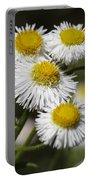 Robin's Plantain Wildflowers - Erigeron Pulchellus Portable Battery Charger