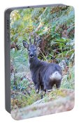 Roe Buck In Woodland Portable Battery Charger
