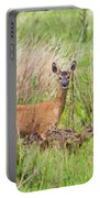 Roe Deer Capreolus Capreolus With Two Fawns Portable Battery Charger