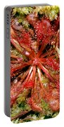 Round-leaved Sundew Portable Battery Charger