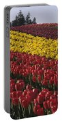 Rows Of Multicolored Tulips In Field Mount Vernon Washington Sta Portable Battery Charger