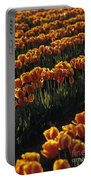 Rows Of Orange Tulips In Field Mount Vernon Washington State Usa Portable Battery Charger