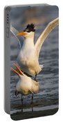 Royal Tern Portable Battery Charger