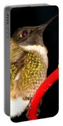 Ruby-throated Hummingbird Landing On Feeder Portable Battery Charger