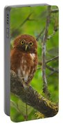 Rufous Morph Costa Rican Pygmy-owl Portable Battery Charger