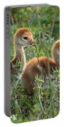 Sandhill Chicks Portable Battery Charger